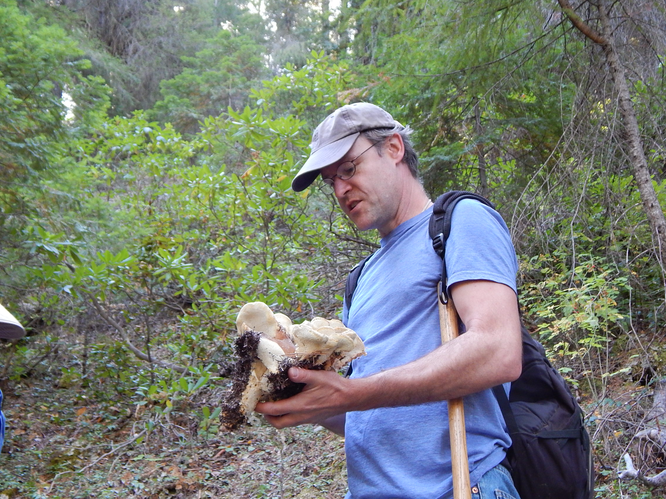 Scot with shelf fungus