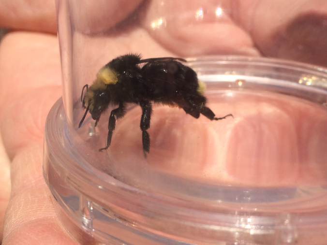 bee-in-glass